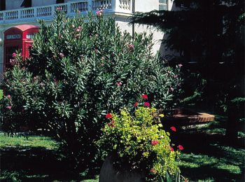 Hotel Villa Beatrice e Hotel Villa Mary – Loano (SV)