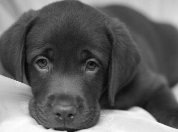 Separazione e animali domestici
