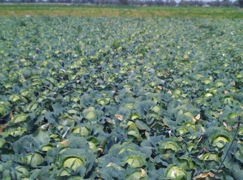 2014: Anno Internazionale dell'Agricoltura Familiare