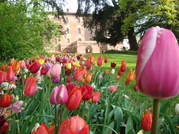 giovanigenitori-messer-tulipano.jpg