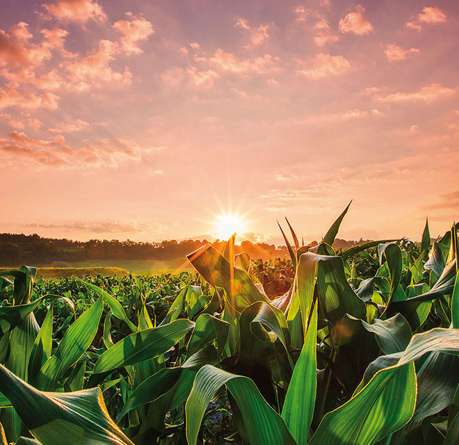Micotossine e pesticidi