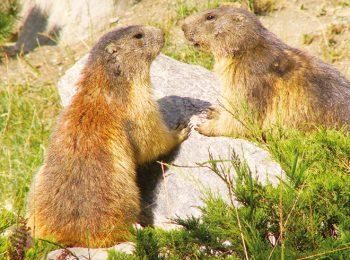 Parc Animalier d'Introd – Introd (AO)