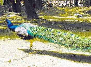 Parco L'Oasi degli Animali – San Sebastiano Po (TO)
