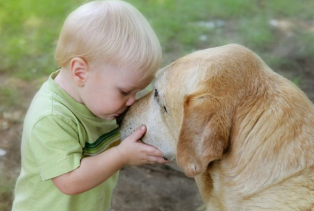 Con un cane in casa ti ammali di meno