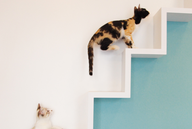 Crazy Cat Cafe – Milano