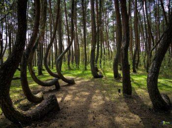 Quattro passi nella Foresta Storta!