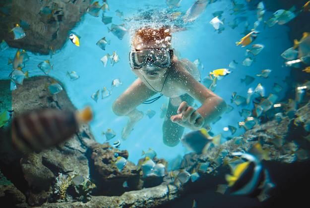 Mini-Sub nel mondo sommerso