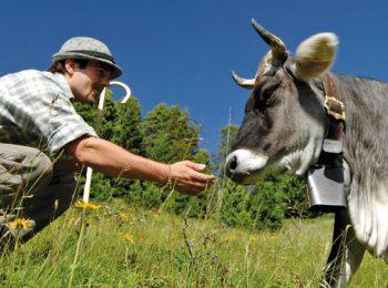Slow Meat: sì alla carne ma solo di qualità