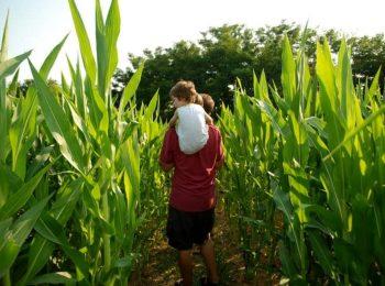 Il Labirinto di Mais di Mezzago: la land art divertente a portata di bambini
