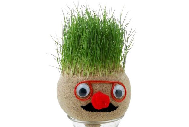 Testa d'erba