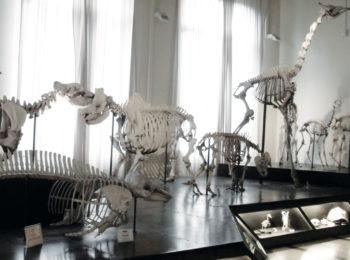 Museo Civico di Zoologia – Roma