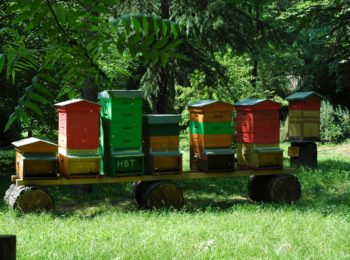 Mieli e api all'Orto Botanico