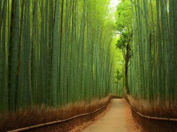 La foresta e i suoi suoni