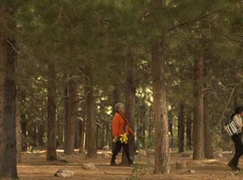 Nei suoni del bosco