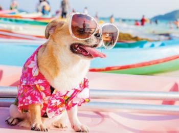 Una vacanza family e pet friendly