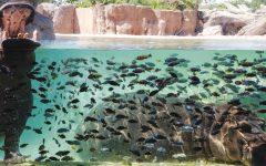 GG in piscina con gli ippopotami