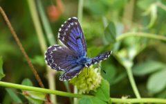 GG festival delle farfalle