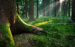 GG esploriamo il bosco