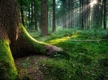 Esploriamo il bosco!
