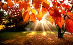 GG fierucolina di autunno
