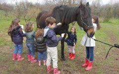 GG lab conoscenza e cura del cavallo