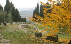 GG olivo olive olio del mondo antico