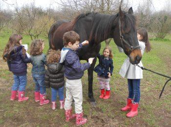 Lab conoscenza e cura del cavallo