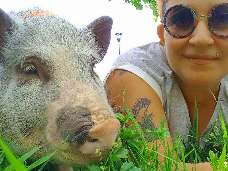A spasso con Elvis, maiale da compagnia