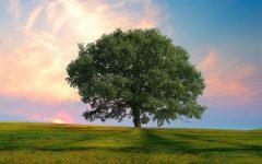 GG chiama gli alberi per nome
