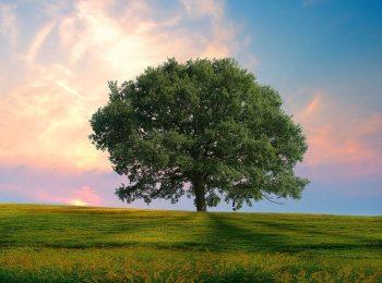 Chiama gli alberi per nome
