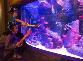 Un Carnevale alternativo, con i pesci del Gardaland SEA LIFE