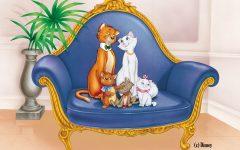 GG gatti neri gatti bianchi a milano
