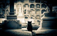 GG gatti neri gatti bianchi a roma