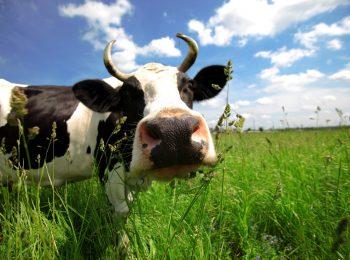 La Centrale del Latte di Torino vuole bene agli animali