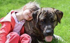 GG 21 apr conoscere il cane e diventare amici