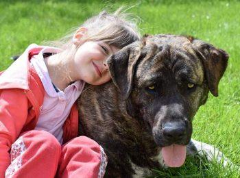 Conoscere il cane e diventare amici