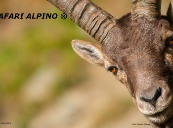 Safari Alpino® Famiglie