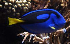 GG aquarium show