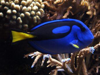 Aquarium Show