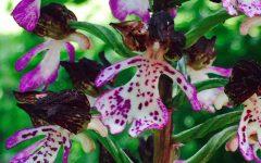 GG esotico mondo delle orchidee