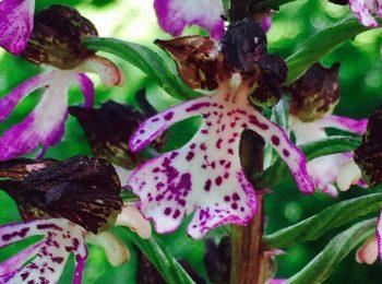 L'esotico mondo delle orchidee
