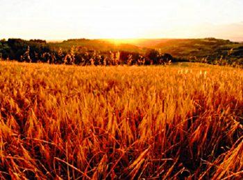 Merenda culturale all'azienda agricola Le Valli a Lucardo