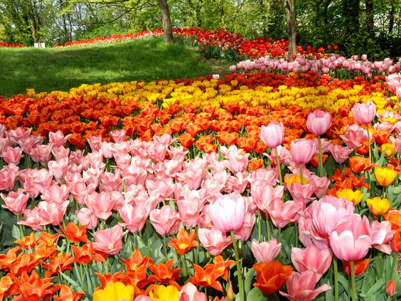 GG primavera e giardini in fiore in italia2