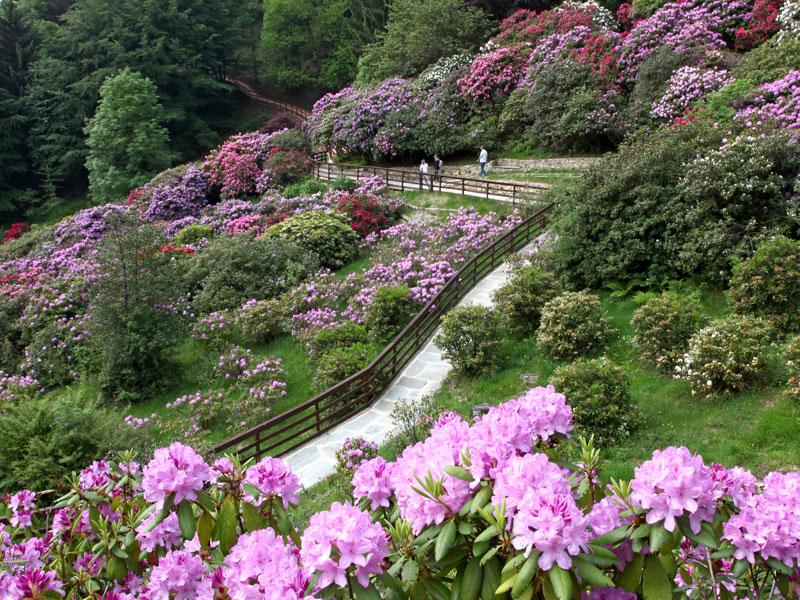 GG primavera e giardini in fiore in italia4