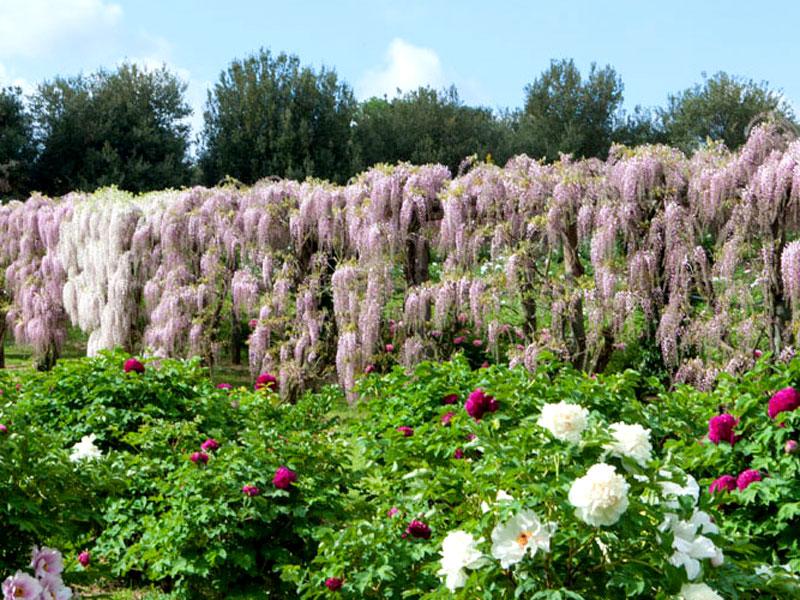 GG Primavera E Giardini In Fiore In Italia5