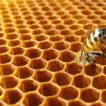 Le api e l'alveare