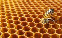 GG le api e alveare