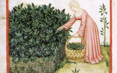 GG le erbe e il loro uso nel mondo antico
