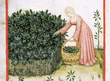 Le erbe e il loro uso nel mondo antico