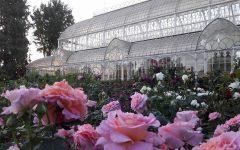 GG mostra primaverile di piante e fiori 2018